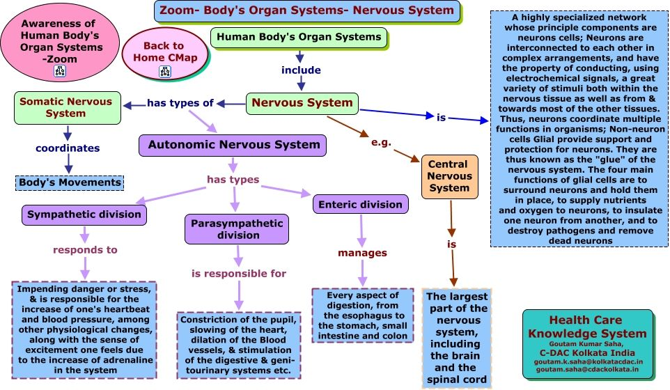 Physiological Flow Charts/Mind Maps Groovy   Nervous ...