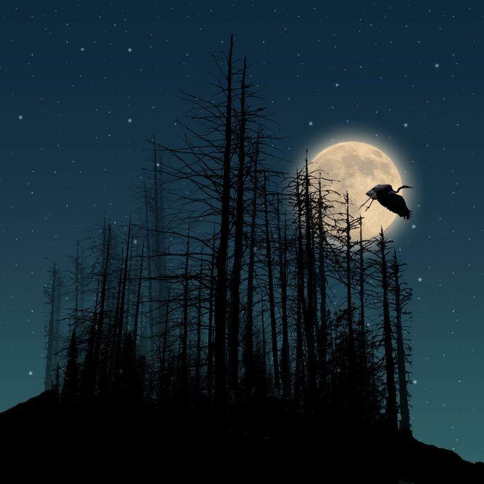 души веселиться, картинки птица ночь салона обработает заказ