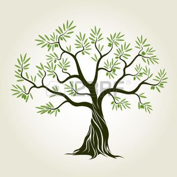 olive tree: Olive tree with leafs. Vector Illustration ...