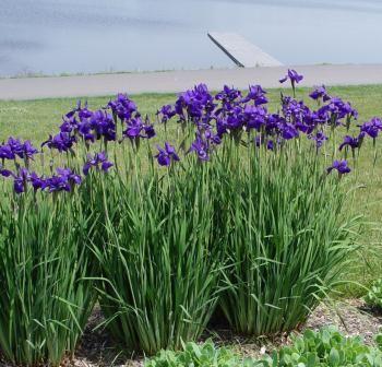 Shade Garden Ideas Zone 6 shade plants perennials | partial shade perennial flowers zone 6