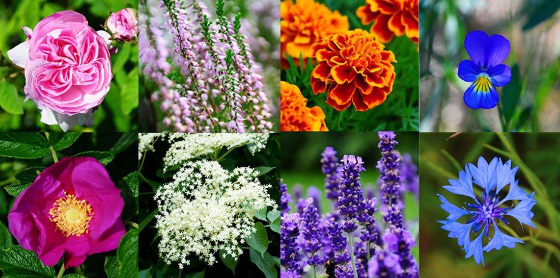 Pin On Jadalne Kwiaty