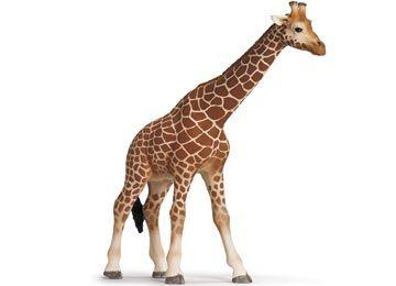 Giraffe Female (Birthday 2012)