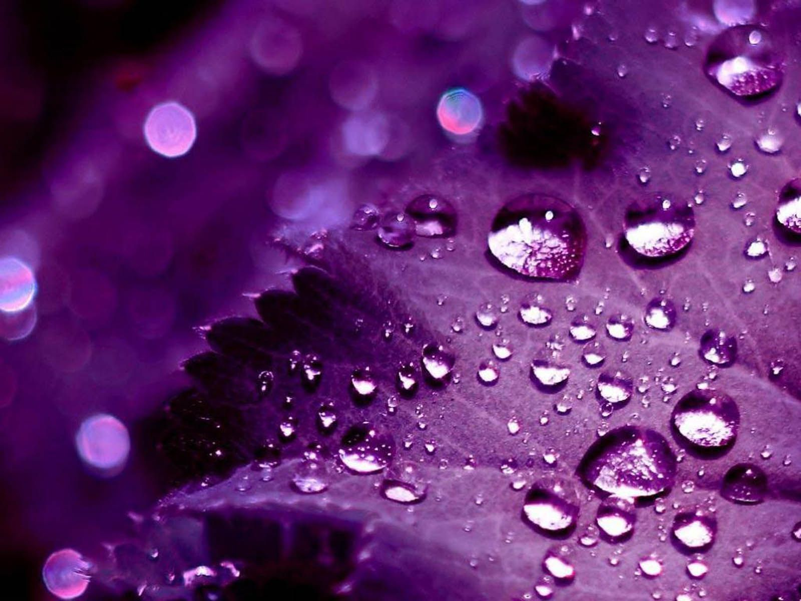 Tumblr iphone wallpaper purple - Wallpapers For Pretty Purple Backgrounds Tumblr 1