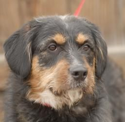 Adopt Kobe On With Images Dog Sounds Terrier Dogs Animals