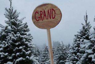 Holiday Tree Farms Oregon S Washington County Holiday Tree Christmas Tree Farm Tree Farms