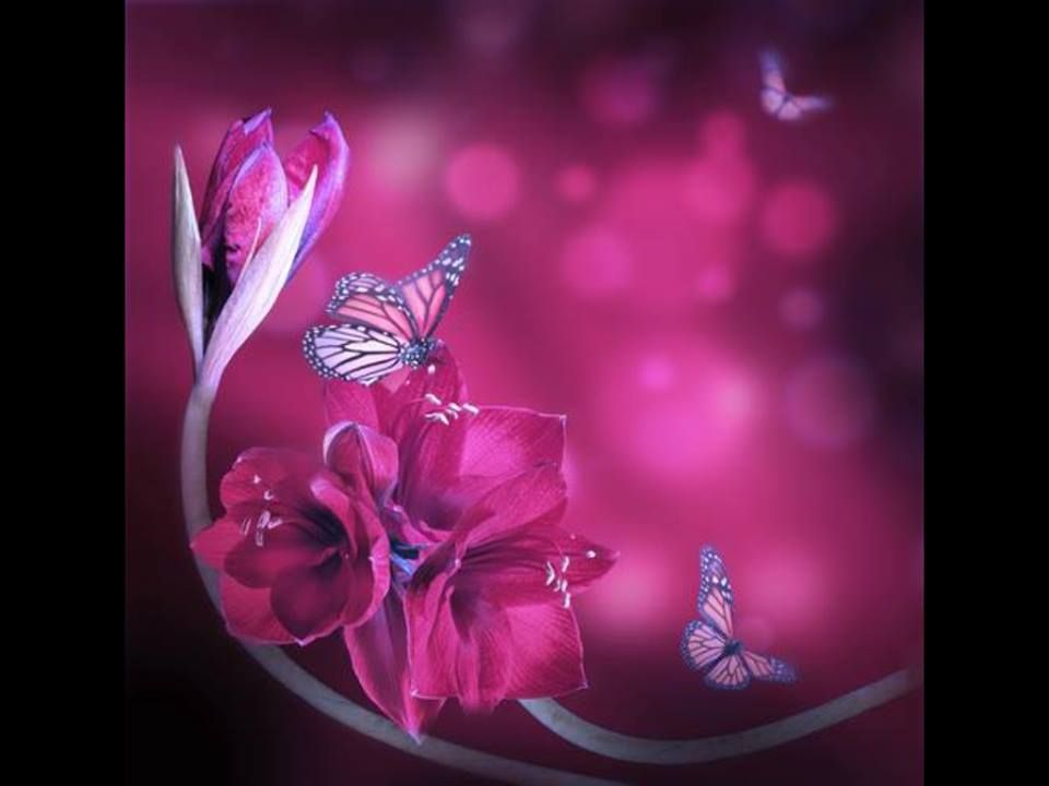 Dark Pink Beautiful Butterflies Art Flower Stock Photography
