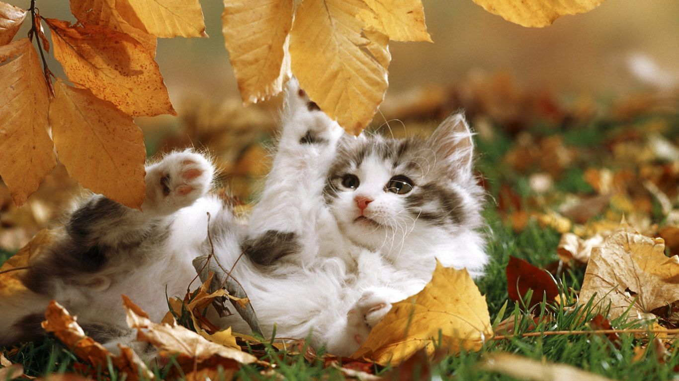 Fall Feline Leaves Kitten Kitty Playing Autumn Sweet Cat Playtime Fall Cats Super Cute Animals Cats And Kittens