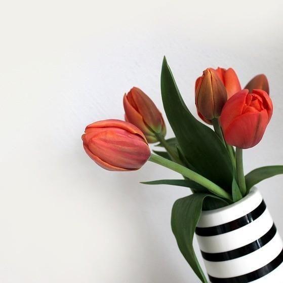 Siempre es un buen día para dedicarnos unas #flores, porque a veces la vida es más que #blancoynegro. #MueveteOn #Rayas #Stripes #flor #tulip #tulips #tulipan #decor #decoracion #instadecor #homdedecor #happythursdya #redessociales #socialmedia #marketing #marketingdigital #marketingonline #flowers