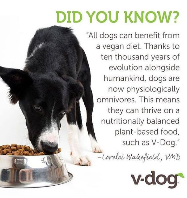 Basic Vegan Recipe For Dogs Feed Twice A Day Offer Clean Water