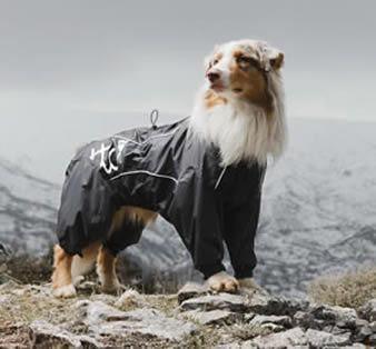 Canine waterproof rain suits