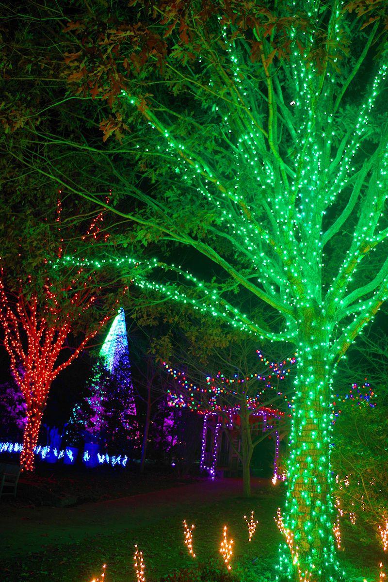 Winter Lights at NC Arboretum in Asheville, NC Asheville