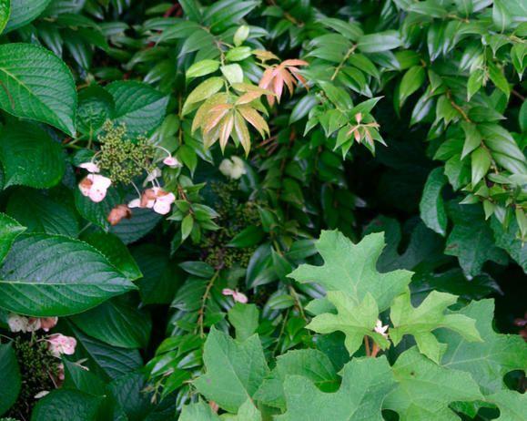 Shade-Tolerant-Evergreen-Bush-Zone-Guide / Planting | Fiskars