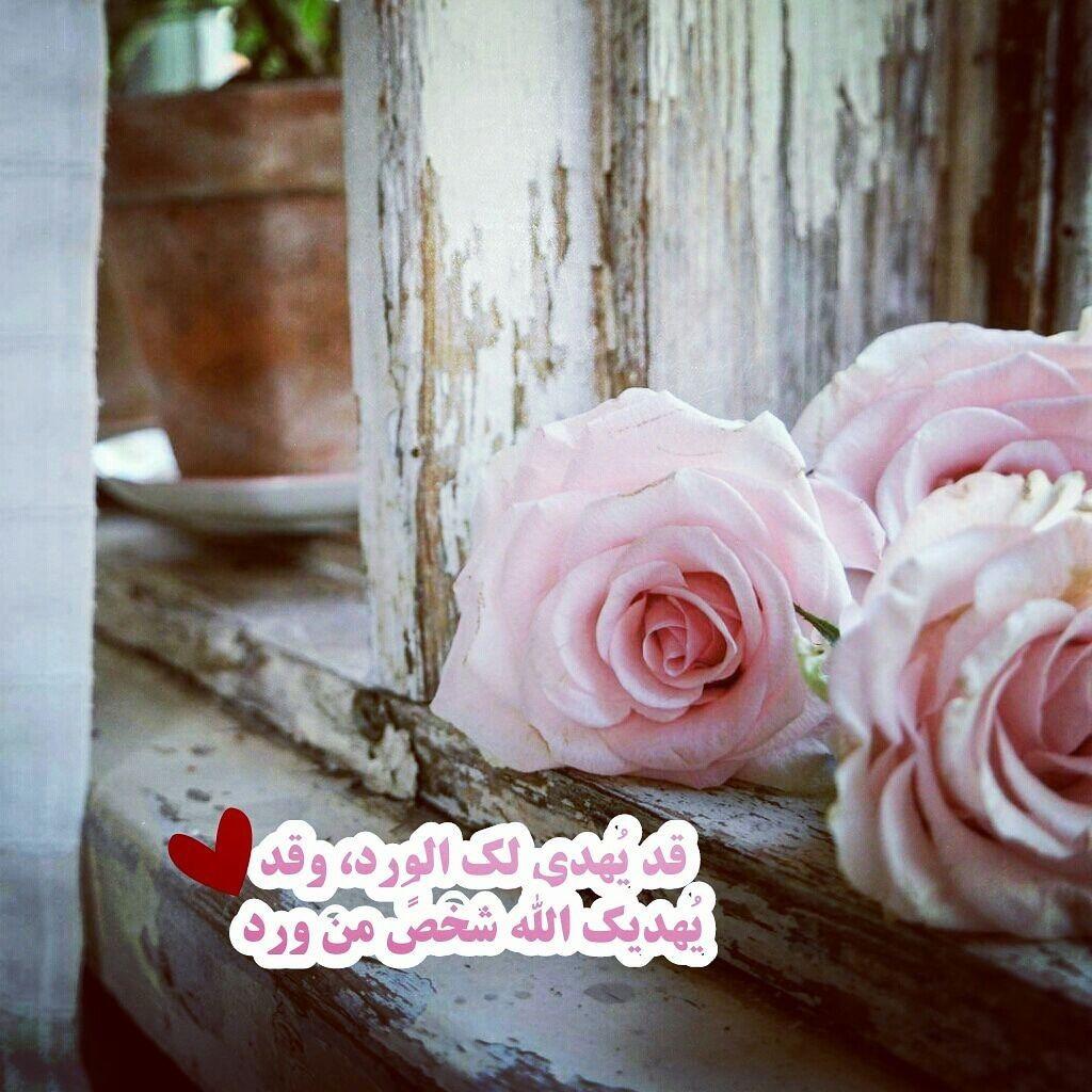 سلام على من مر على مرنا فحلاه A N S ورود شخص هدية اقوال Flowers Rose Plants