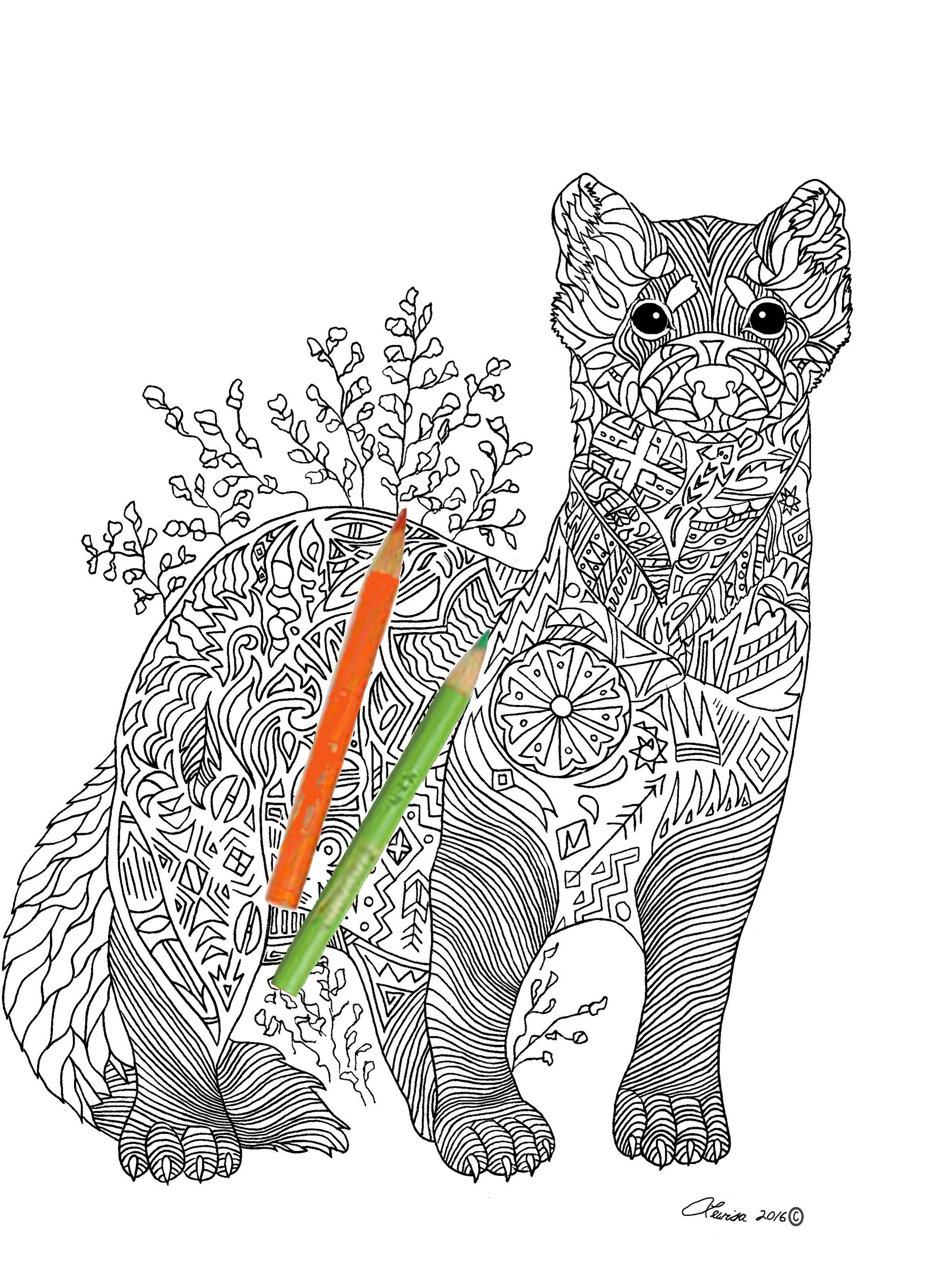 Black Footed Ferret Image From My Coloring Book Created To Bring