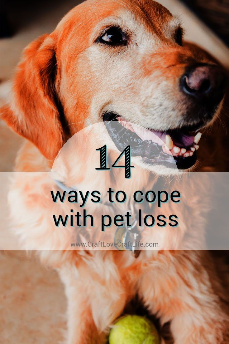 14 ways to cope with pet loss Pet loss, grief