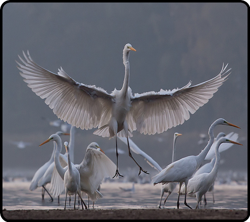 the dance of the cranes
