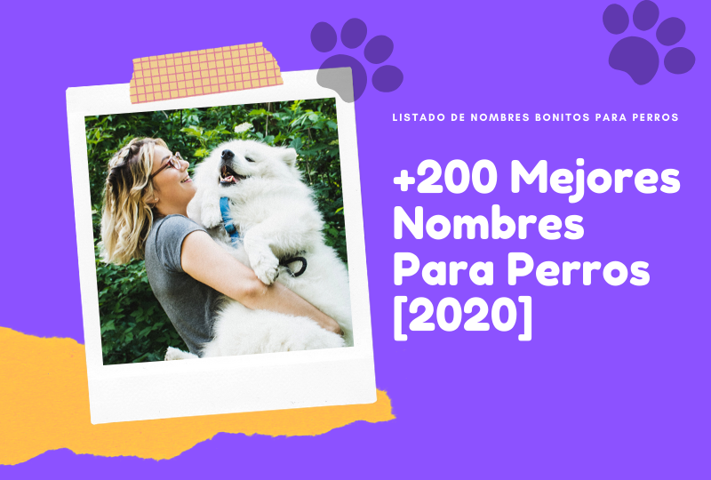 200 Mejores Nombres Para Perros 2020 Ideas De Nombres De Perros Nombres Para Perros Machos Nombres De Perros Nombres De Perro Hembra