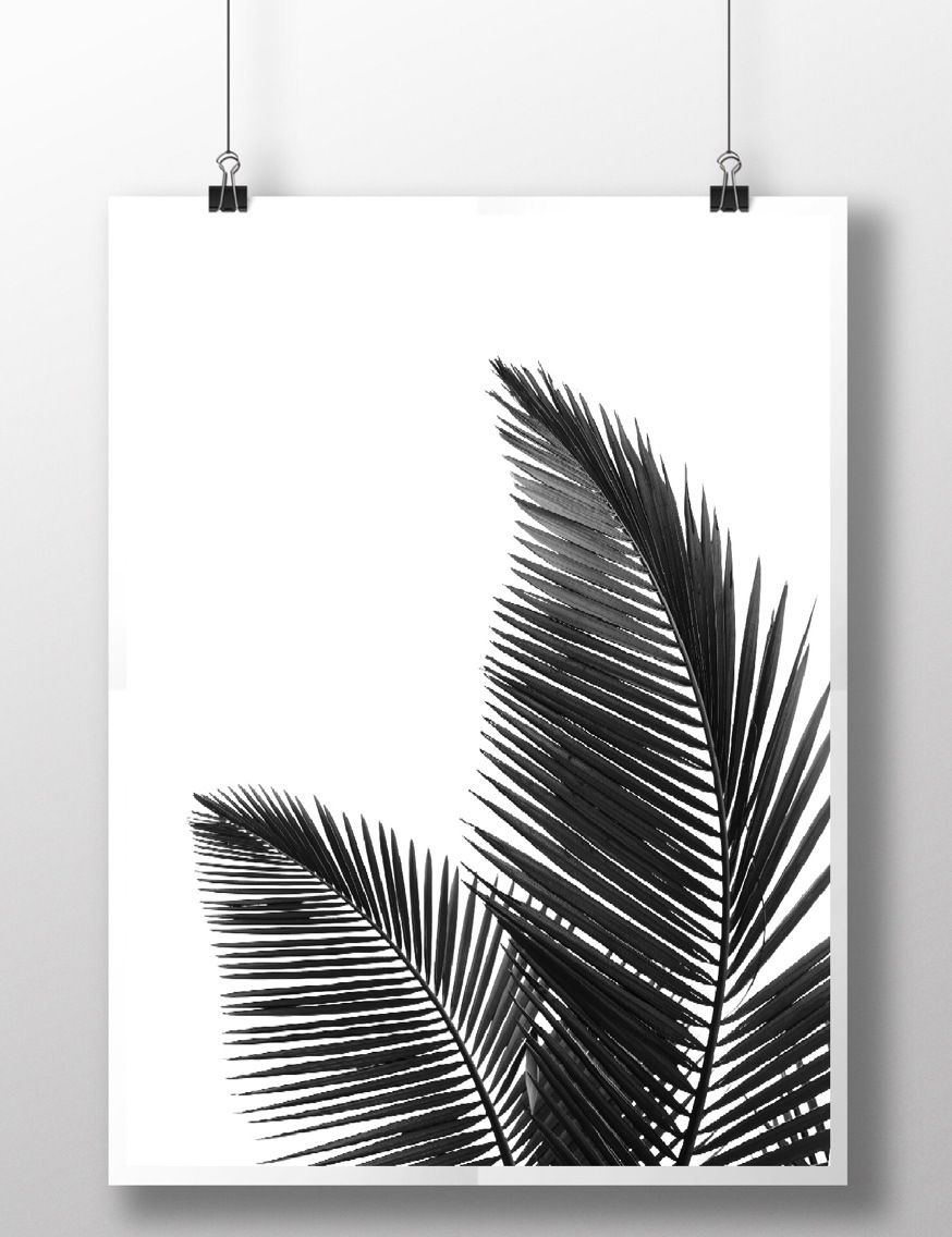 """résultat de recherche d'images pour """"cadre feuille palmier noir et"""