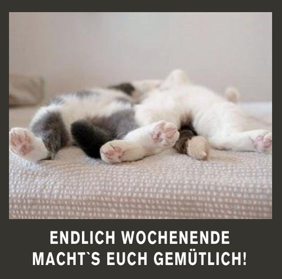 Humor Samstag Katze Sonntag Meme Lustige Spruche Xdpedia