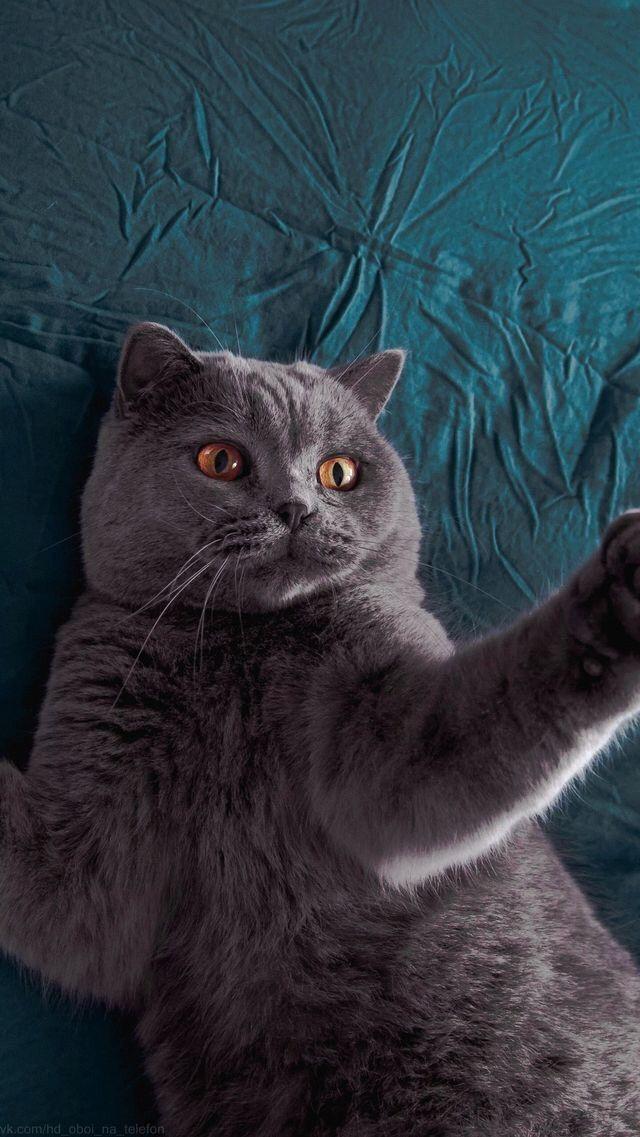 Meow / cat / kitten / mr / кот / киса / мяу / животное / animal / прелесть / милота