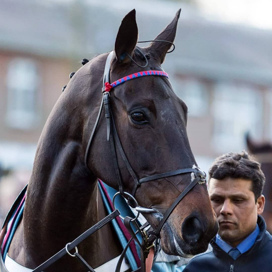 """Toby Connors on Instagram: """"Sprinter Sacre"""""""
