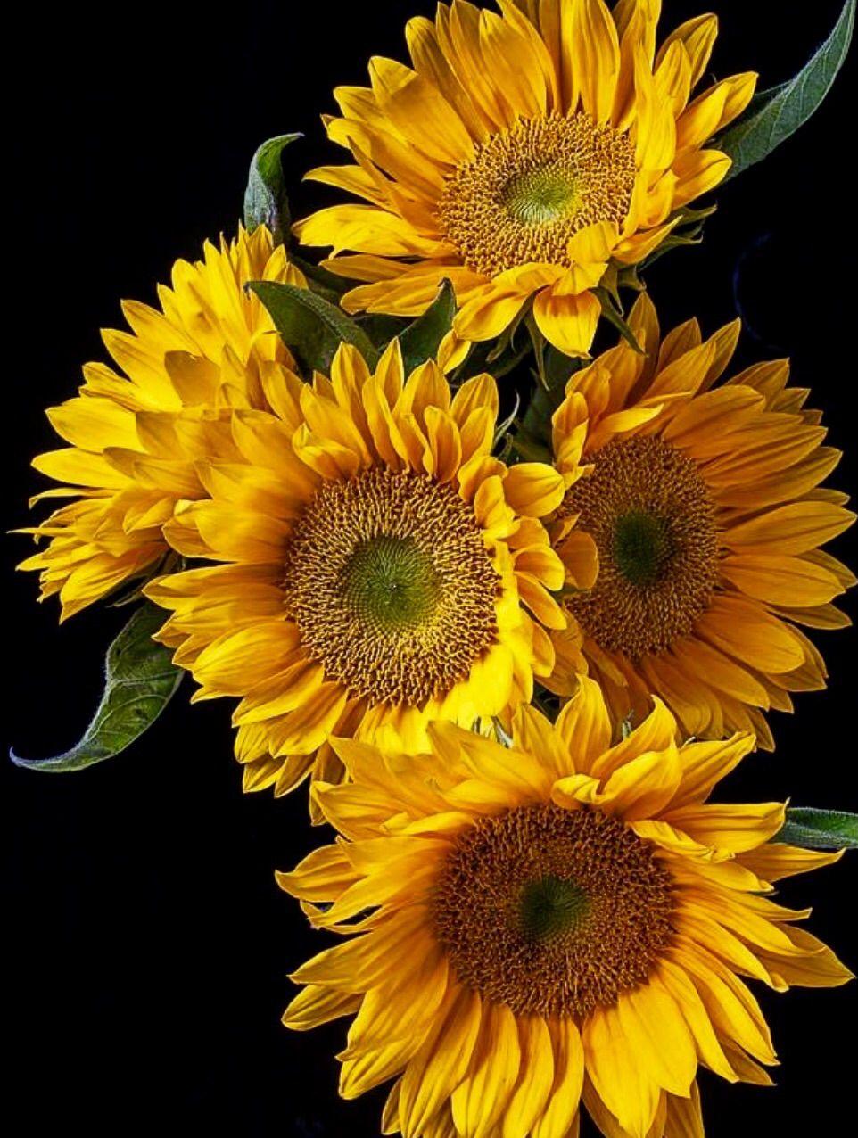 Sunflowers | Fabulous Florals I | Pinterest
