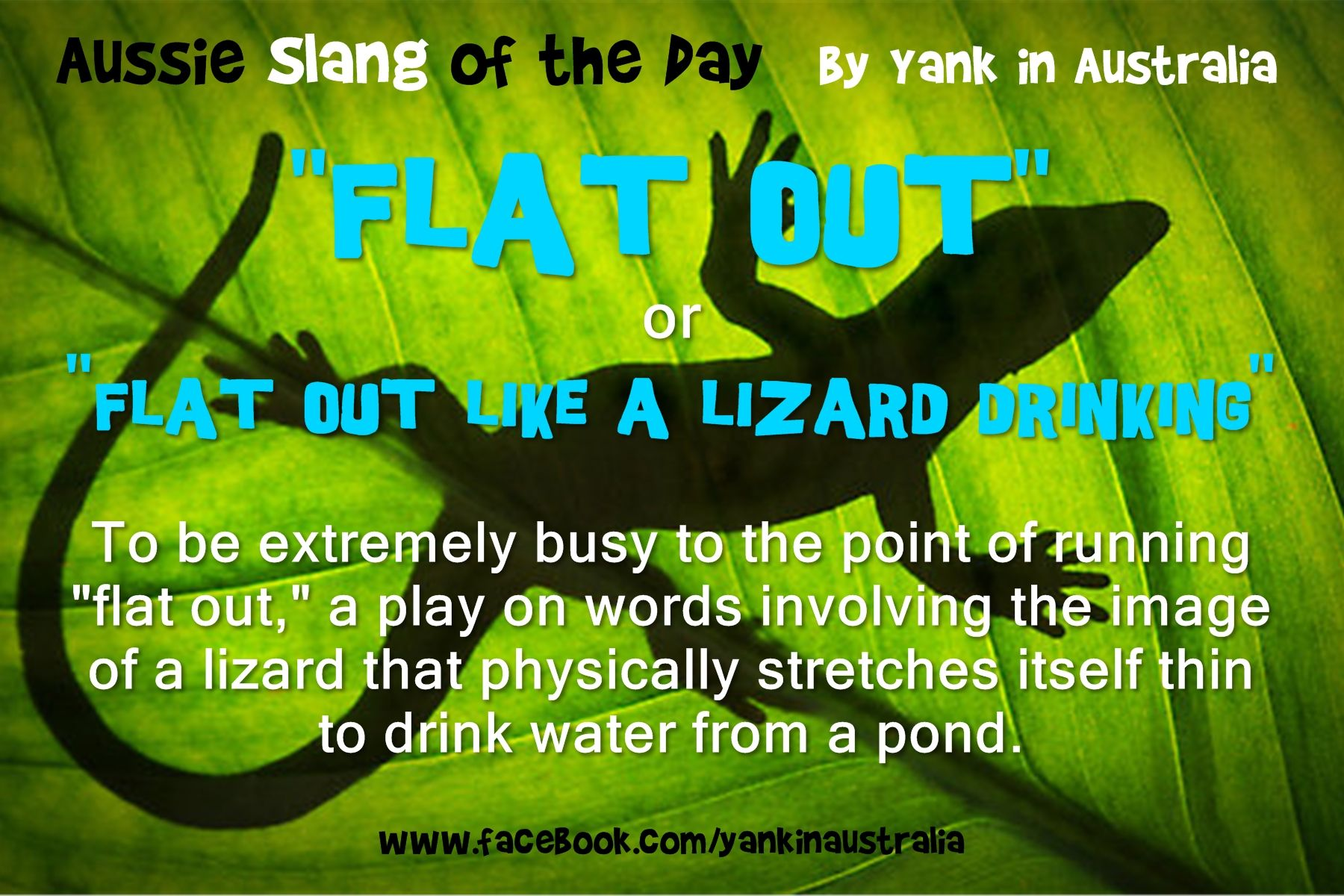 Okay heres some more aussie slang for you flat outke a okay heres some more aussie slang for youlike a lizard drinking to be extremely busy to the point of running flat out a play on words involving the kristyandbryce Gallery
