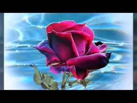 Youtube Papel De Parede Rosa Mensagem Com Flores Papel De