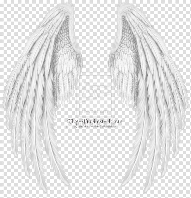 Thy Darkest Hour White Wings Drawing Cherub Angel Wing Angel Transparent Background Png Clipart Wings Drawing Angel Wings Png Wings Png