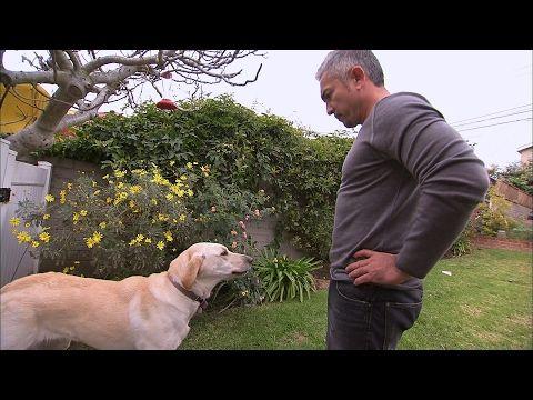 Cesar 39 S Millan Quot The Dog 39 S Whisperer Quot Tragedy