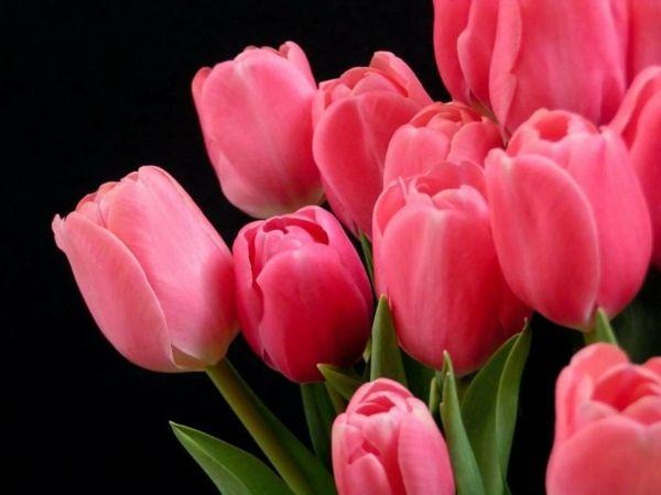 Schöne Dekoideen Tulpen Garten Pflanzen | Blumen | Pinterest ... Tulpen Im Garten Pflanzen