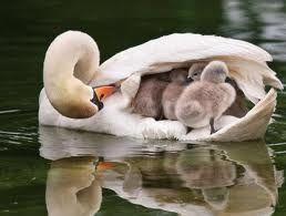 Cuidado maternal