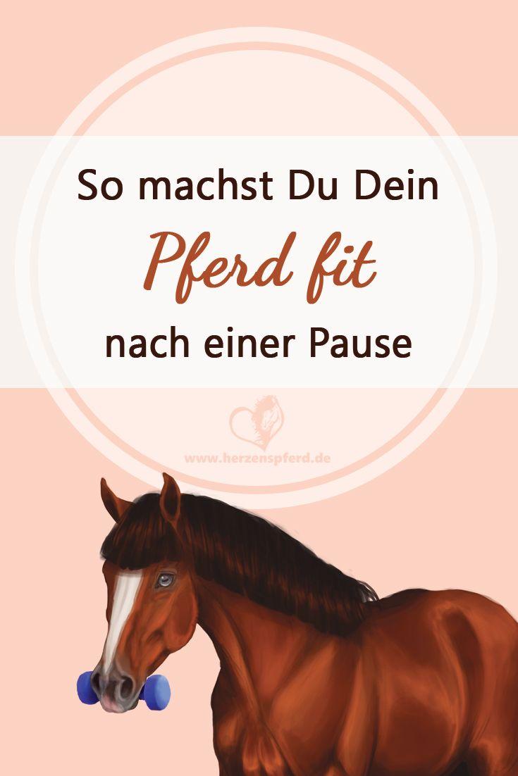 so machst du dein pferd fit - tipps für den muskelaufbau. | pferde