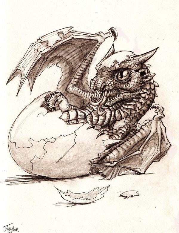 Baby Dragon Dragon Sketch Baby Dragon Tattoos Baby Dragons Drawing