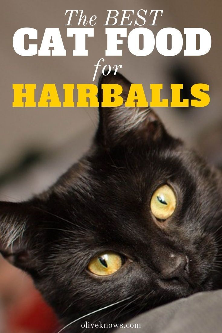 The Best Cat Food for Hairballs Best cat food, Cat food