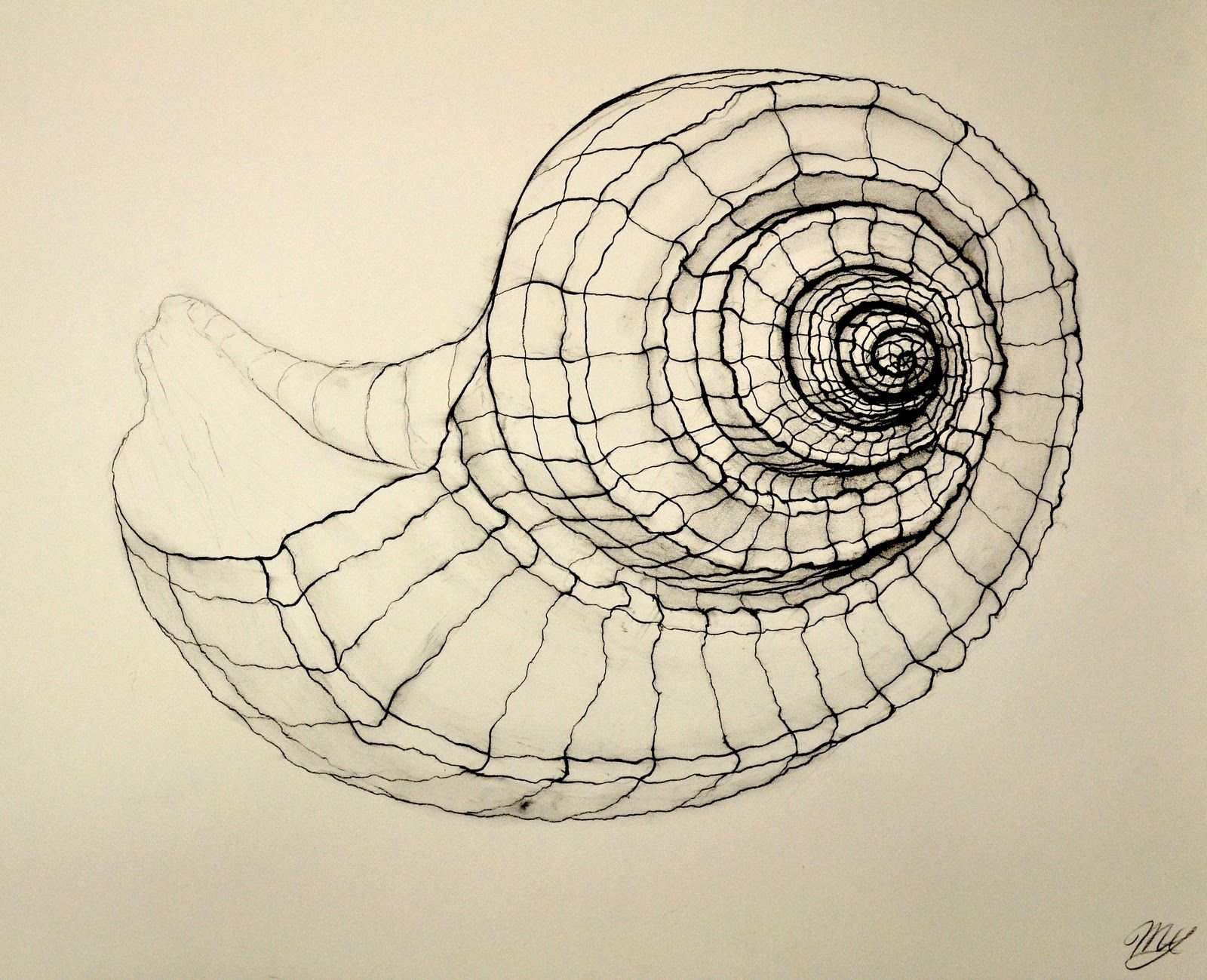 Contour Line Drawing Ideas : Pin by annette bukovinsky on shells pinterest shell