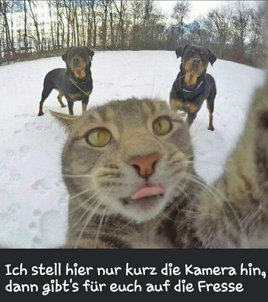 Pin von Kerstin EßerQuast auf Lustige Tier Bilder