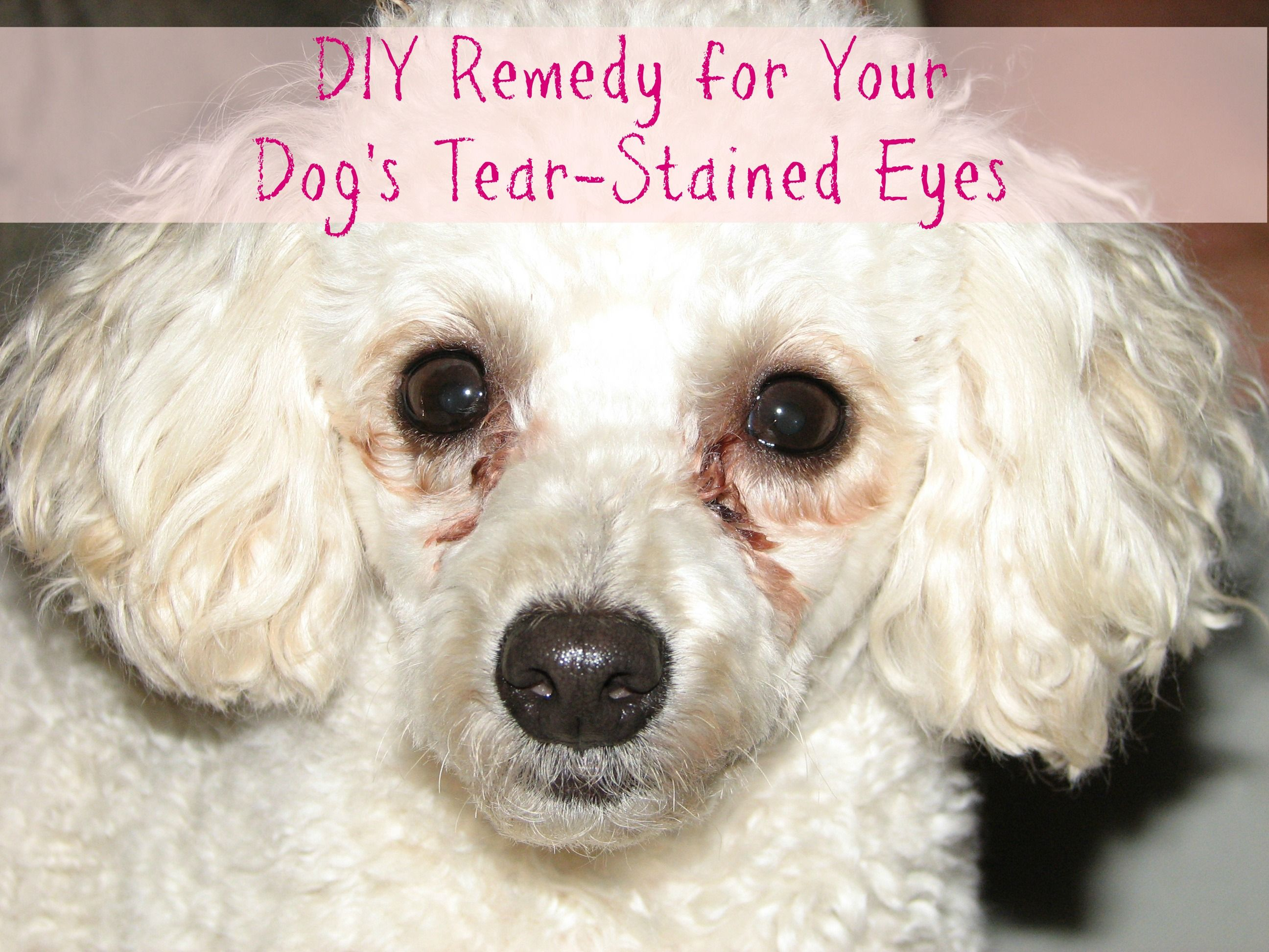 Does your dog get tear stains under her eyes? Here's a DIY