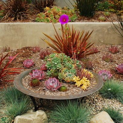 Drought landscaping ideas drought tolerant plant - Drought tolerant plants landscape design ...