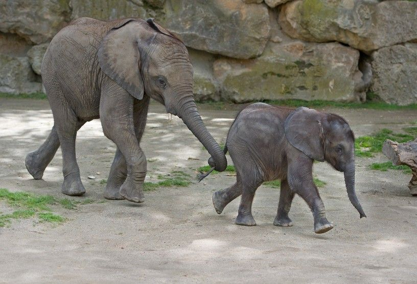 Iqhwa (7 month) and Tuluba (2 years) are the best friends, Zoo Vienna