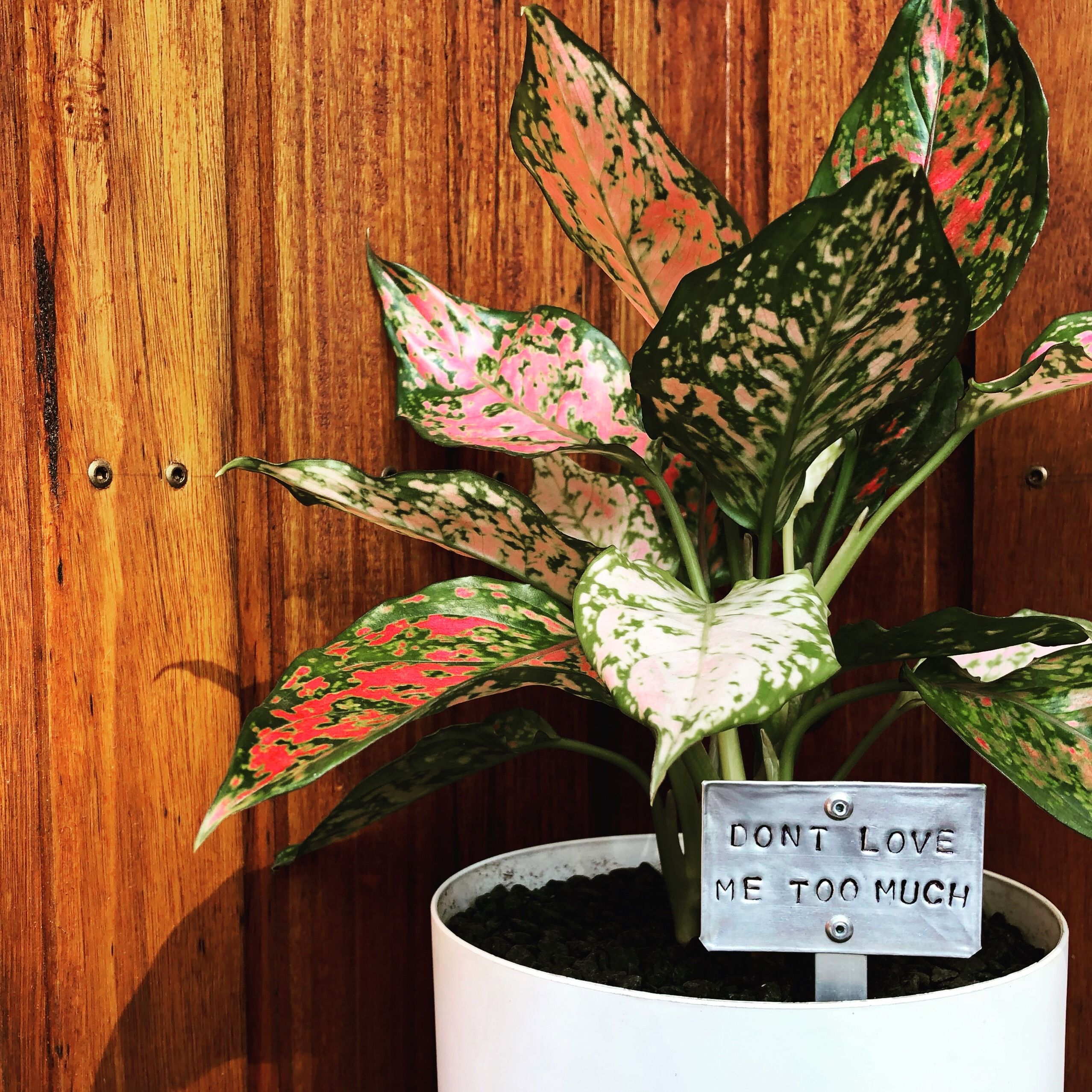 Indoor Plant Tags Indoor Plant Markers Plant Decor 400 x 300
