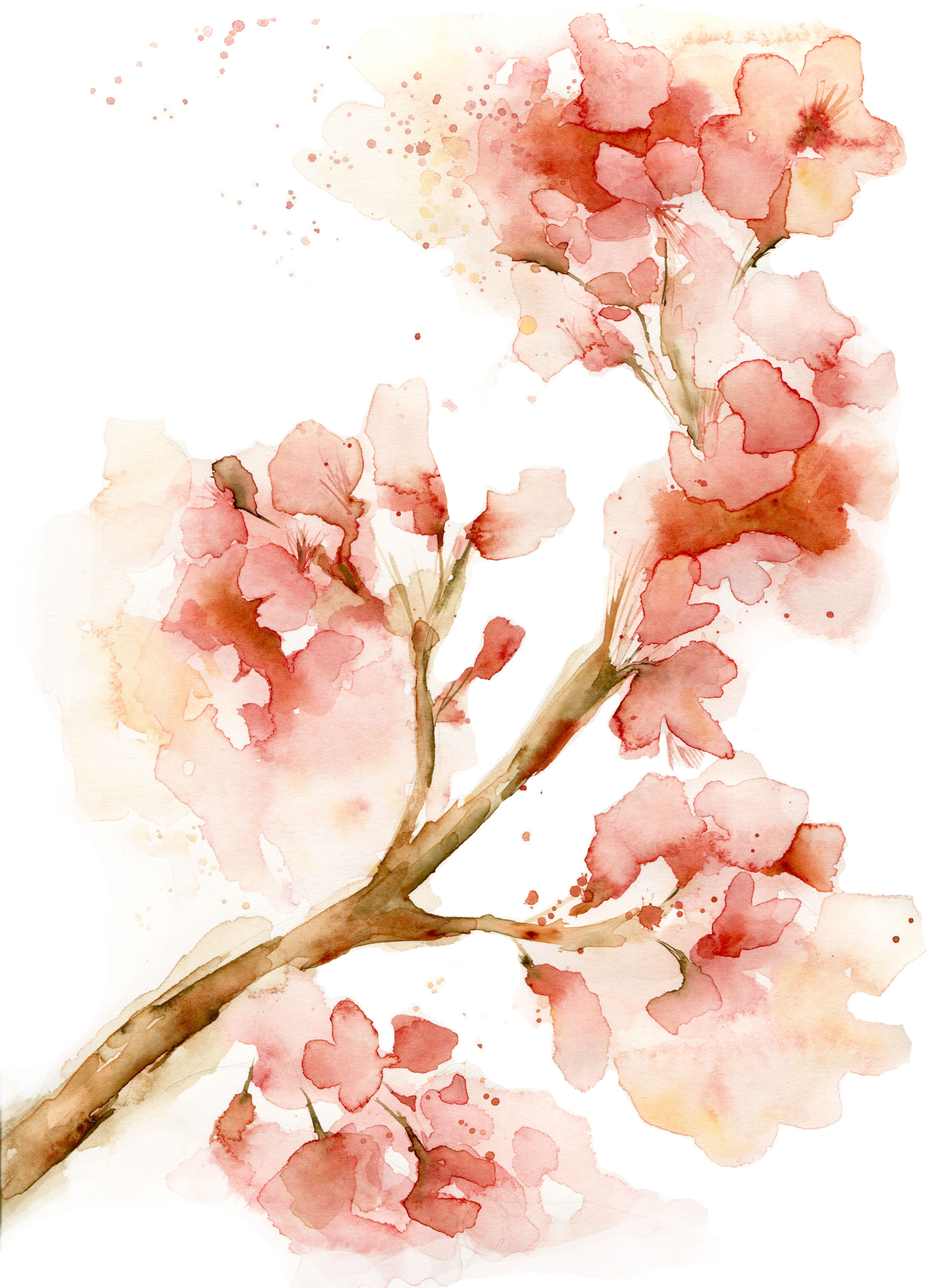 Cherry blossom watercolor cherry blossom art blossom flower pink wall art ink
