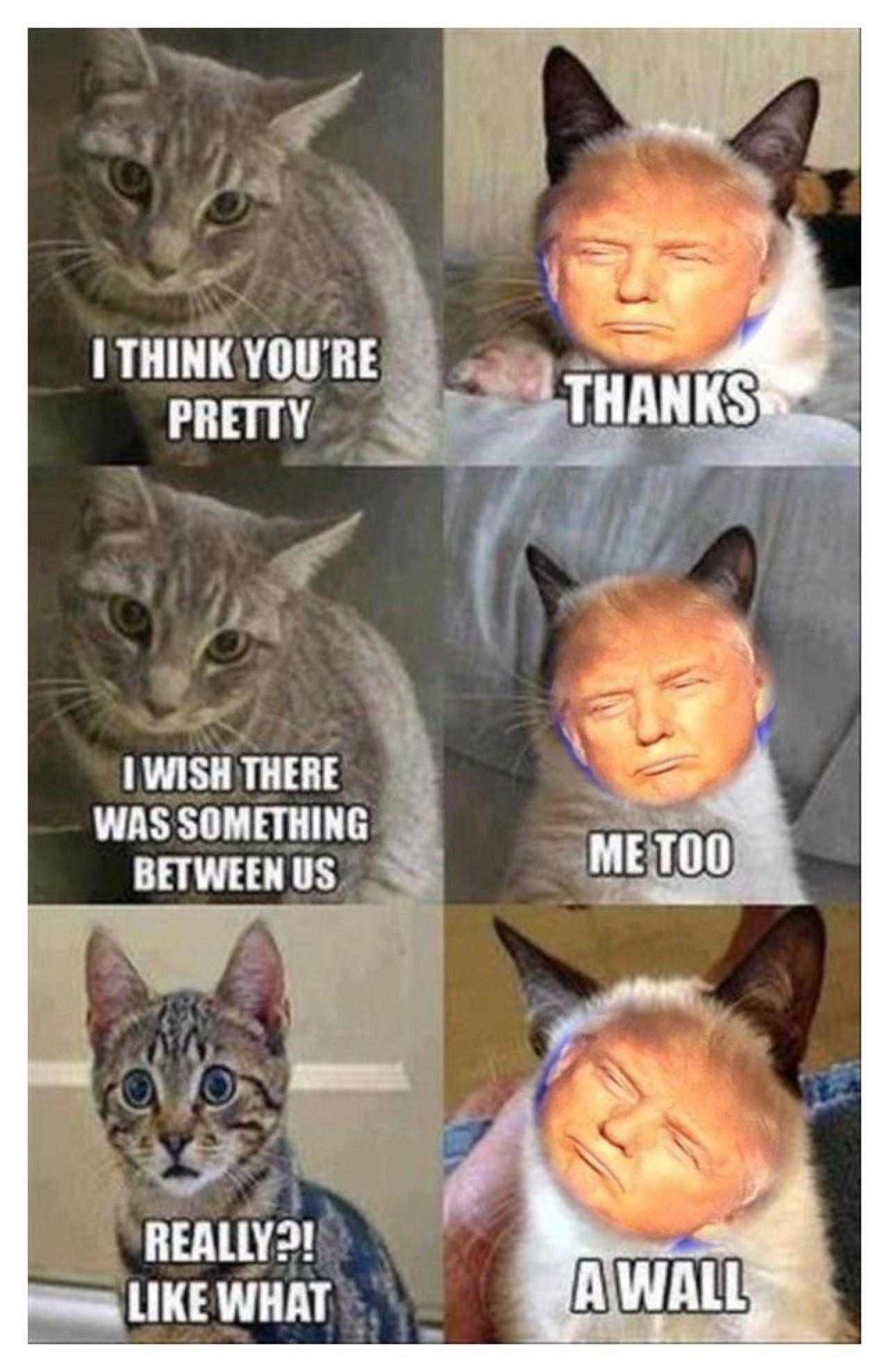 Grumpy Cat With Donald Trumps Face