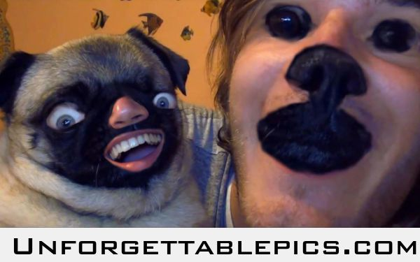 Pug Human Faceswap Face Swaps Funny Face Swap Funny Faces