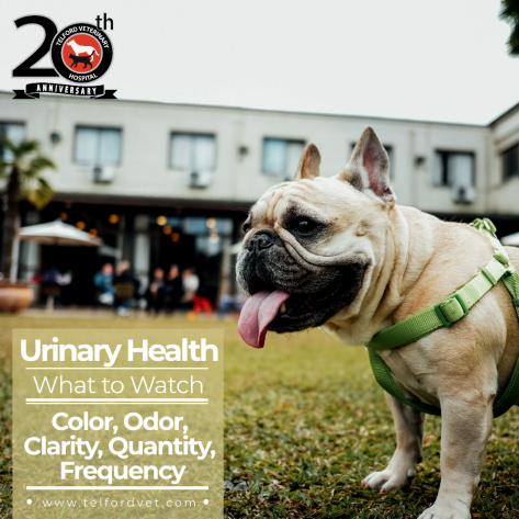Urinary Health For Your Dog or Cat Dog training, Dogs