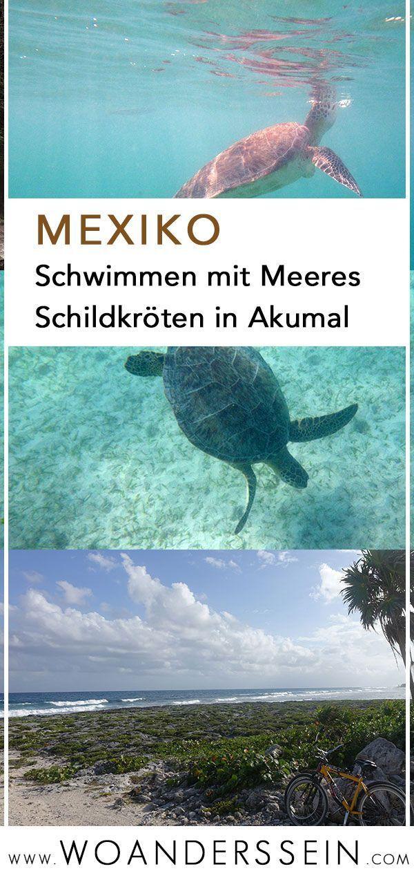Schwimmen mit Meeresschildkröten in Akumal #travelnorthamerica