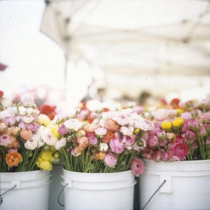 #flowersoftheday #flowersmakemehappy #flowerstyles #vickiarcher #pinterest