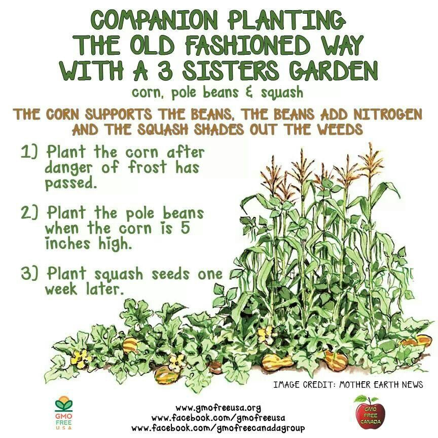 Old Fashioned Companion Gardening