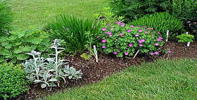 Easy Landscaping Ideas For Beginners | Gardening Tips For Beginners| Garden  Design| Vegetable Gardening