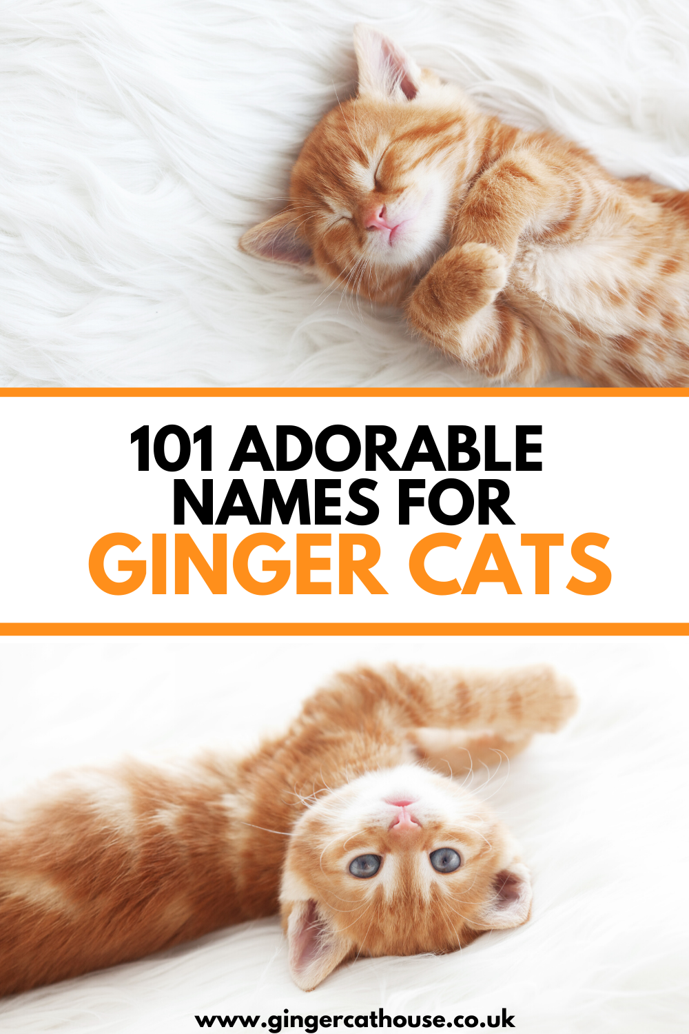 101 Adorable cat names for ginger cats! in 2020 Ginger